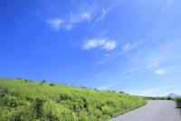 緑の草原と道に白雲