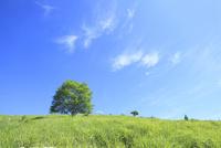 緑の草原と緑樹に白雲
