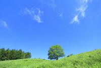 緑の草原と緑樹に白雲 11076010059| 写真素材・ストックフォト・画像・イラスト素材|アマナイメージズ