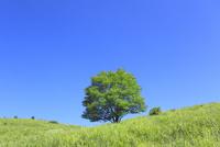 緑の草原と緑樹