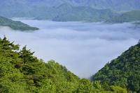 雲海の中禅寺湖