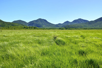 緑の戦場ヶ原 太郎山・大真名子山