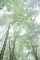 霧と緑の林
