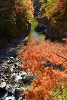 紅葉の金蔵落しの渓流