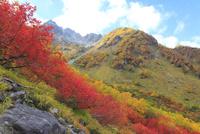 紅葉の涸沢 11076010844| 写真素材・ストックフォト・画像・イラスト素材|アマナイメージズ