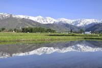 水田と白馬三山