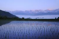 水田と朝焼けの白馬三山