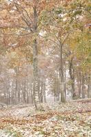 紅葉と雪のブナ林