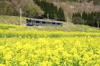 大糸線とナノハナ畑 11076011042| 写真素材・ストックフォト・画像・イラスト素材|アマナイメージズ
