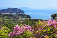 直島のツツジの花と瀬戸内海 11076011317| 写真素材・ストックフォト・画像・イラスト素材|アマナイメージズ