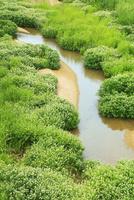 新緑の与田川