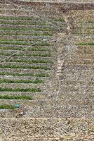 遊子水荷浦の段々畑