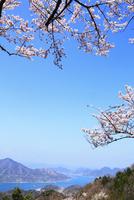 岩城島 積善山のサクラ 11076011418| 写真素材・ストックフォト・画像・イラスト素材|アマナイメージズ