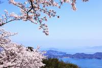 岩城島 積善山のサクラ 11076011420| 写真素材・ストックフォト・画像・イラスト素材|アマナイメージズ