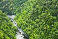 新緑の祖谷渓谷・祖谷川