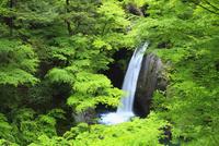 新緑と大釜の滝