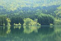 新緑と湖面