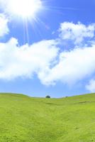 草原と緑樹に太陽