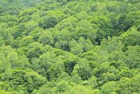 新緑と渓谷