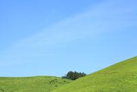 草原と緑樹 11076011702| 写真素材・ストックフォト・画像・イラスト素材|アマナイメージズ