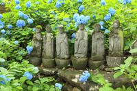 お地蔵様とアジサイの花 11076011704| 写真素材・ストックフォト・画像・イラスト素材|アマナイメージズ