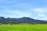 稲田と独鈷山