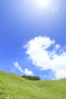 草原と緑樹に太陽光