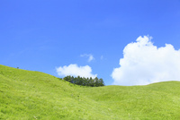 草原と緑樹