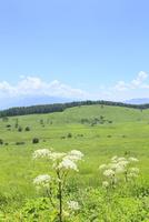 高原とシシウド