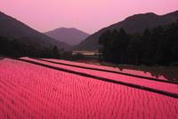 清水の棚田と夕日