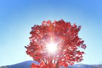 紅葉と太陽