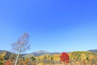 乗鞍高原の紅葉と乗鞍岳