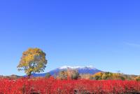 開田高原の紅葉と御岳