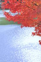 モミジ紅葉と湖面