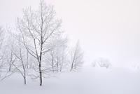 霧氷と雪原 11076012435| 写真素材・ストックフォト・画像・イラスト素材|アマナイメージズ