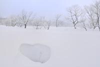 霧氷と雪原 11076012437| 写真素材・ストックフォト・画像・イラスト素材|アマナイメージズ