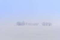 霧氷と雪原 11076012439| 写真素材・ストックフォト・画像・イラスト素材|アマナイメージズ