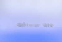 霧氷と雪原 11076012441| 写真素材・ストックフォト・画像・イラスト素材|アマナイメージズ