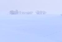 霧氷と雪原 11076012443| 写真素材・ストックフォト・画像・イラスト素材|アマナイメージズ