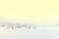 霧氷と雪原 11076012446| 写真素材・ストックフォト・画像・イラスト素材|アマナイメージズ