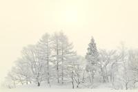 霧氷と太陽 11076012449| 写真素材・ストックフォト・画像・イラスト素材|アマナイメージズ