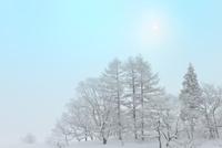 霧氷と太陽