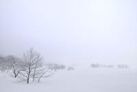 霧氷と雪原 11076012453| 写真素材・ストックフォト・画像・イラスト素材|アマナイメージズ