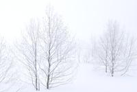 霧氷と雪原