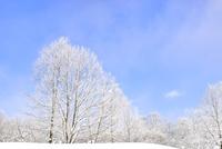 霧氷の木々 11076012457| 写真素材・ストックフォト・画像・イラスト素材|アマナイメージズ