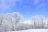 霧氷の木々 11076012464| 写真素材・ストックフォト・画像・イラスト素材|アマナイメージズ