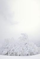 霧氷の木々 11076012474| 写真素材・ストックフォト・画像・イラスト素材|アマナイメージズ