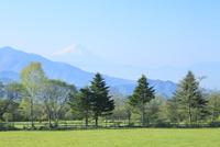 富士山と高原の新緑