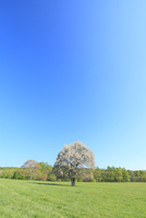 ヤマナシの木と草原