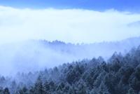 雲海と樹林